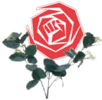 De moederdag PvdA roos...